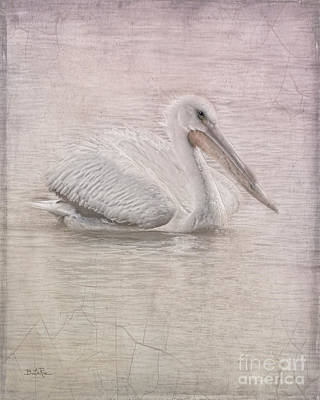 Pelican Digital Art - Pelican In Pastel by Betty LaRue