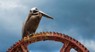 Photograph - Pelican In St. Croix by Craig Bowman