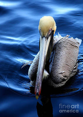 Photograph - Pelican In The Bay by Carol Groenen