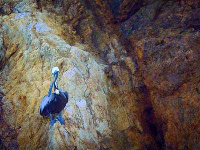 Photograph - Pelican In The Bvi by Kathryn McBride