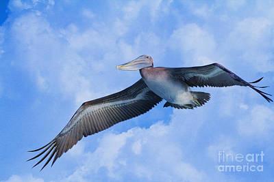 Pelican In The Clouds Art Print by Deborah Benoit