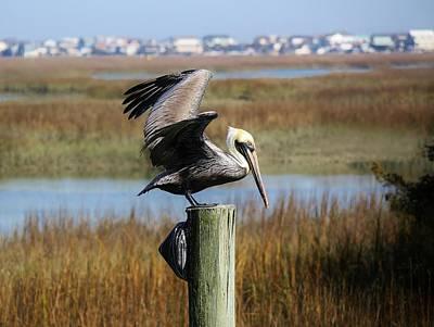 Pelican In The Marsh Print by Paulette Thomas