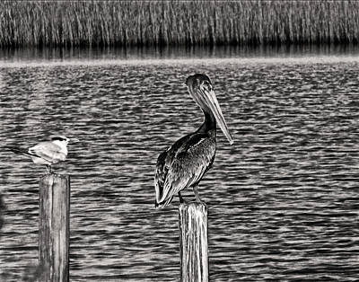 Photograph - Pelican Inland by Chris Flees