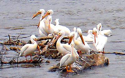 Photograph - Pelican Island by Steve Karol