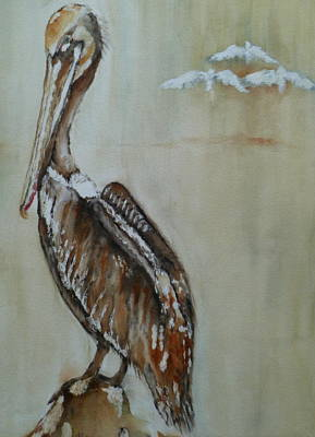 Sea Of Cortez Painting - Pelican by J A Rix