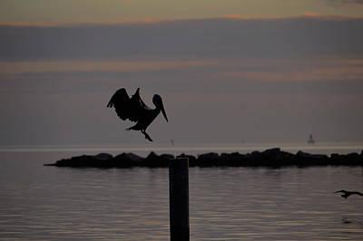 Photograph - Pelican Landing by Leticia Latocki