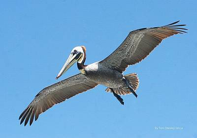 Art Print featuring the photograph Pelican Landing On  Pier by Tom Janca