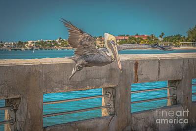 Pelican Landing White Street Pier Key West - Hdr Style Art Print