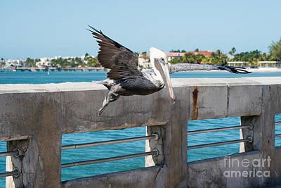 Pelican Landing White Street Pier Key West Art Print