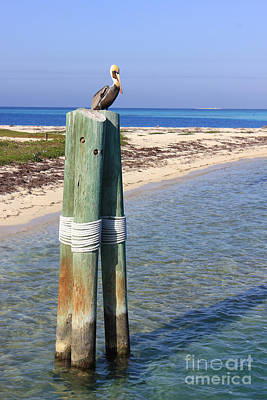 Photograph - Pelican Lookout by Alison Tomich