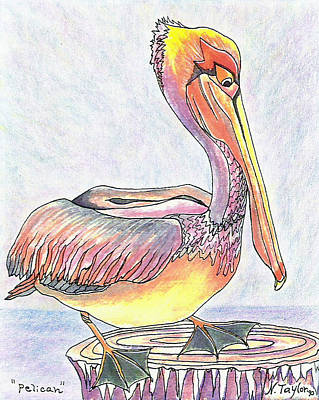 Painting - Pelican by Nancy Taylor