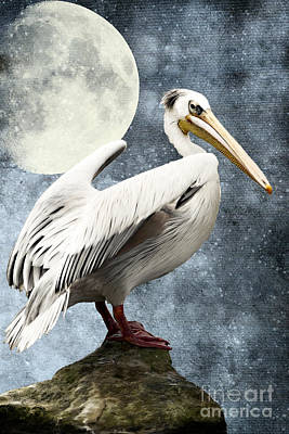 Pelican Mixed Media - Pelican Night by Angela Doelling AD DESIGN Photo and PhotoArt