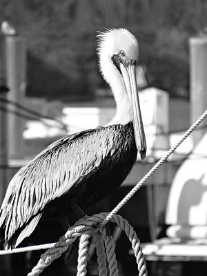 Photograph - Pelican On A Rope by Frederic BONNEAU Photography