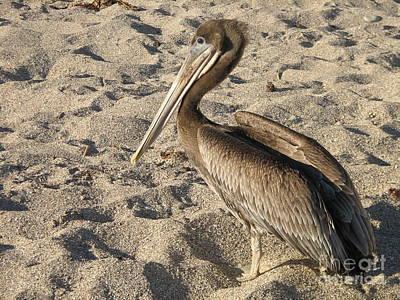 Pelican On Beach Art Print by DejaVu Designs