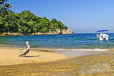 Puerto Vallarta Photograph - Pelican On Beach by Elena Elisseeva
