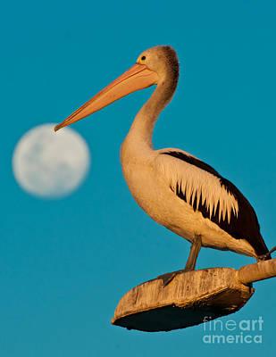 Pelican On Streetlights/ Full Moon Art Print by Michael  Nau