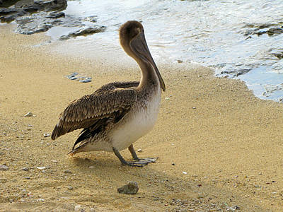 Photograph - Pelican On The Beach  by Ann Powell