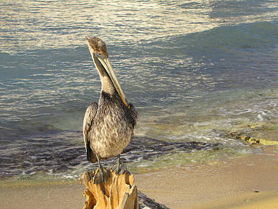 Photograph - Pelican On The Beach -nature Photography by Ann Powell