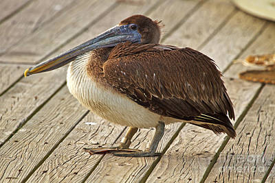 Photograph - Pelican On The Dock II by Gene Berkenbile