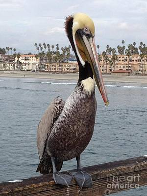 Photograph - Pelican On The Pier  by Bridgette Gomes