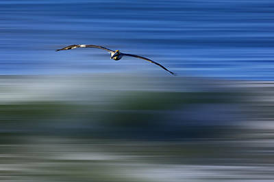 Digital Art - Pelican Over Green Wave  Mg5582 by David Orias