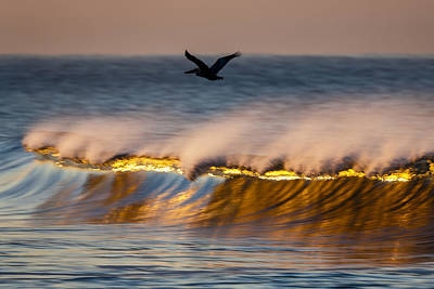 Pelican Over Wave  C6j9351 Art Print