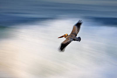 Photograph - Pelican Over Wave  Mg_1212 by David Orias