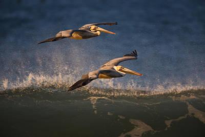 Photograph - Pelican Pair  73a2315 by David Orias