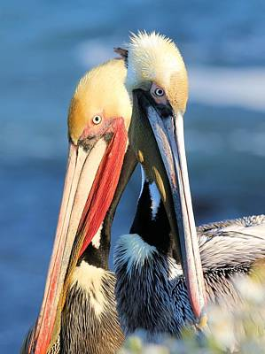 Photograph - Pelican Pair by Jane Girardot