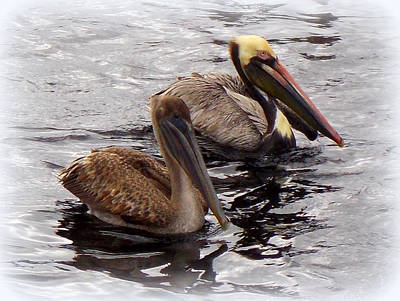 Photograph - Pelican Pair by Sheri McLeroy