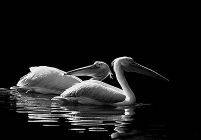 Photograph - Pelican Pals by Wayne Wood