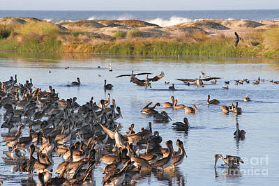 Print featuring the photograph Pelican Party by Bob and Jan Shriner