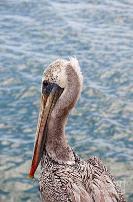 Photograph - Pelican Patrol by Brenda Kean