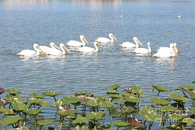 Lilies Photograph - Pelican Patrol by Carol Groenen