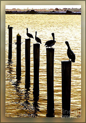 Photograph - Pelican Patrol by Ginny Schmidt