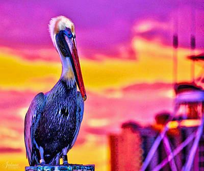 Photograph - Pelican Pete by Jody Lane