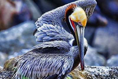 Photograph - Pelican Pit Drying By Diana Sainz by Diana Raquel Sainz