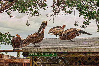 Photograph - Pelican Place by Lewis Mann