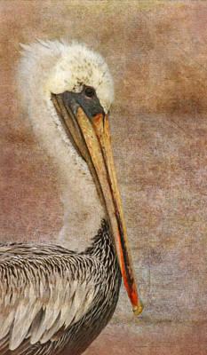 Photograph - Pelican Portrait by Angie Vogel
