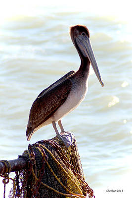 Photograph - Pelican Portrait by Dick Botkin