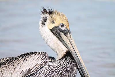 Photograph - Pelican Portrait by Jessica Brown