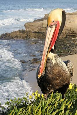 Photograph - Pelican Pose by Jane Girardot