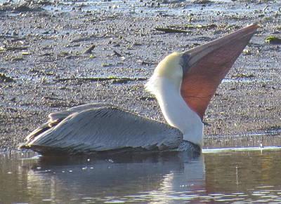 Photograph - Pelican Pouch by Ellen Meakin