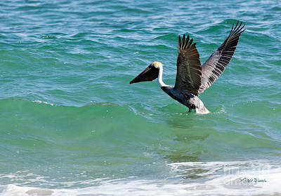 Photograph - Pelican Preparing For Takeoff by Michelle Wiarda-Constantine