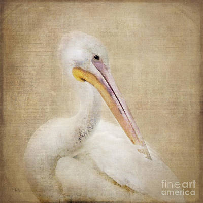 Pelican Photograph - Pelican Primping by Betty LaRue