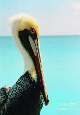 Photograph - Pelican Profile And Water by Heather Kirk