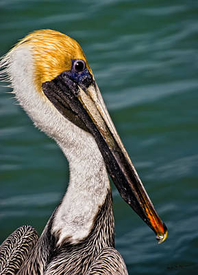 Mark Myhaver Royalty-Free and Rights-Managed Images - Pelican Profile No.40 by Mark Myhaver