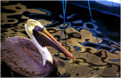 Photograph - Pelican Puppet by Wayne King