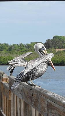 Ready To Fly Photograph - Pelican Ready For Flight by Deb Jazi Raulerson