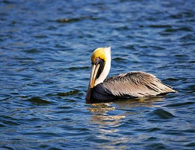 Photograph - Texas Coastal Bend Pelican by Kristina Deane